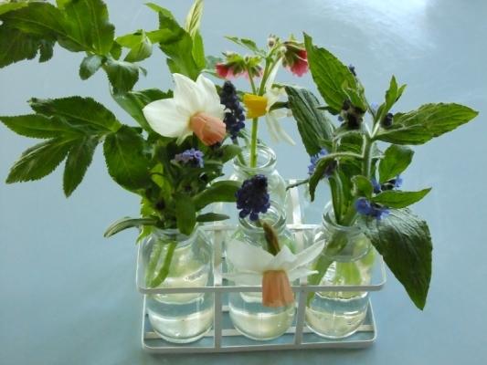 British Flowers Narcissi Katie Heath