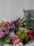 Seasonal locally grown Cumbrian cut flowers