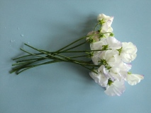 Pale Sweet Peas