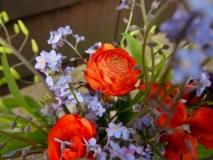 Ranunculus and forget me nots