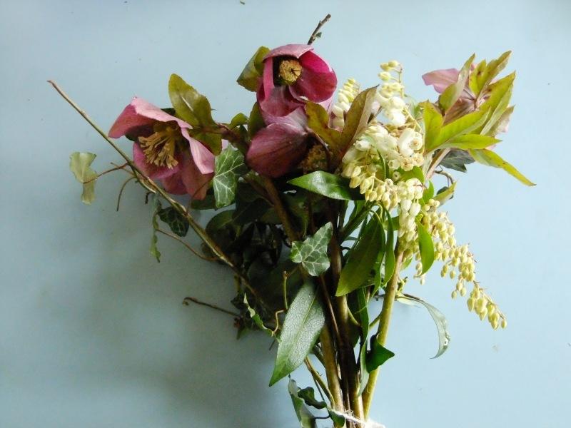 British Flowers Hellebore