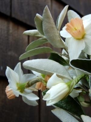 British Flowers Springtime