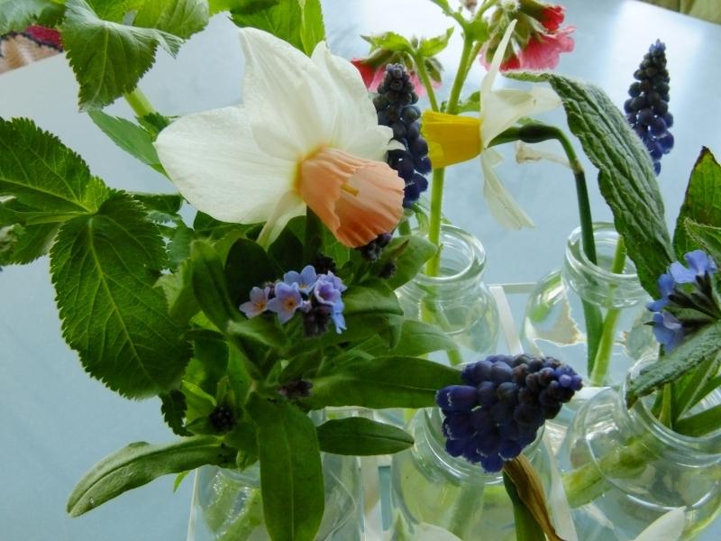 British Cumbrian Flowers Narcissi
