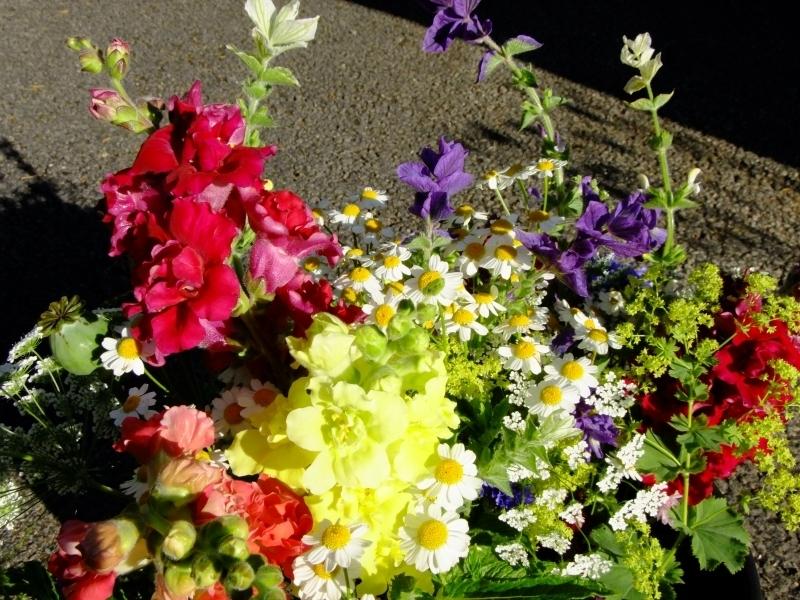 Summer Cumbrian Flowers