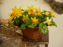 Spring table decoration with narcissi